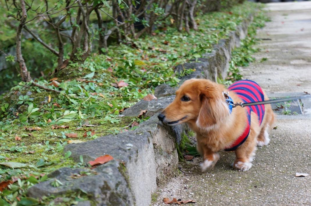 熊本城野鳥園でそらくん散歩
