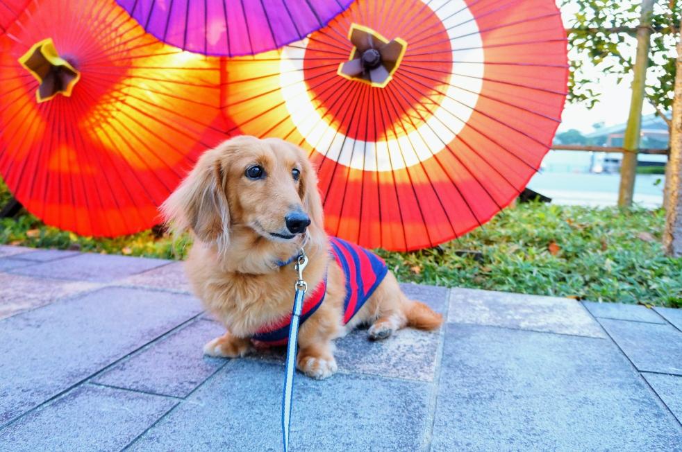 城彩苑 和傘とそら