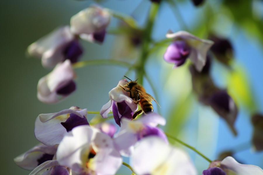 鹿央物産館「里やま館」 藤と蜂