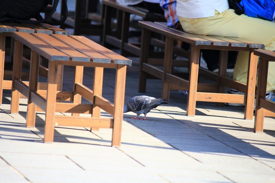 城彩苑 鳩