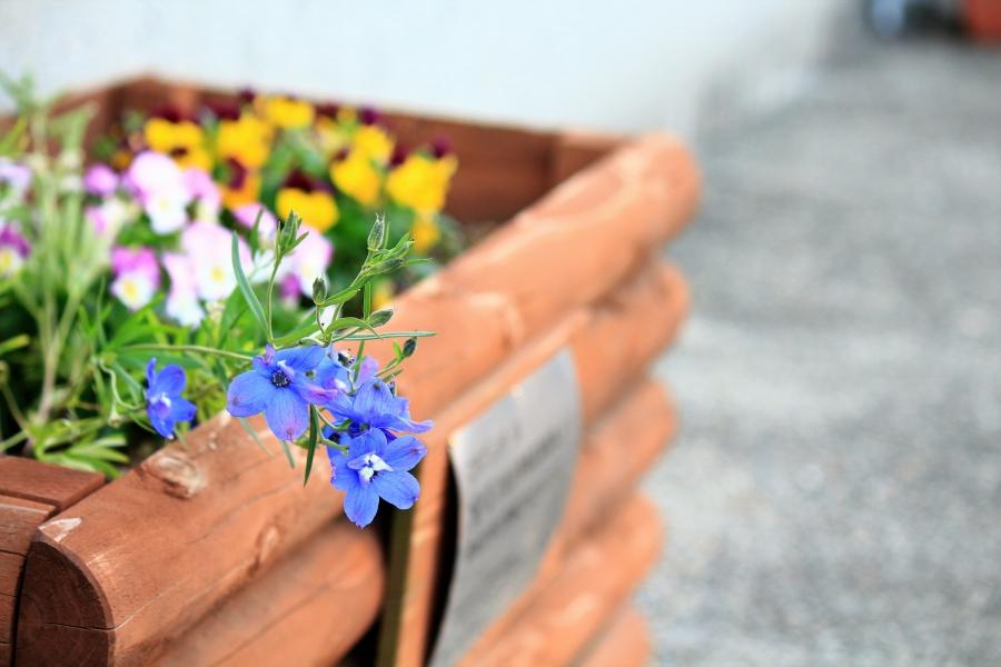 三角西港 プランターの花