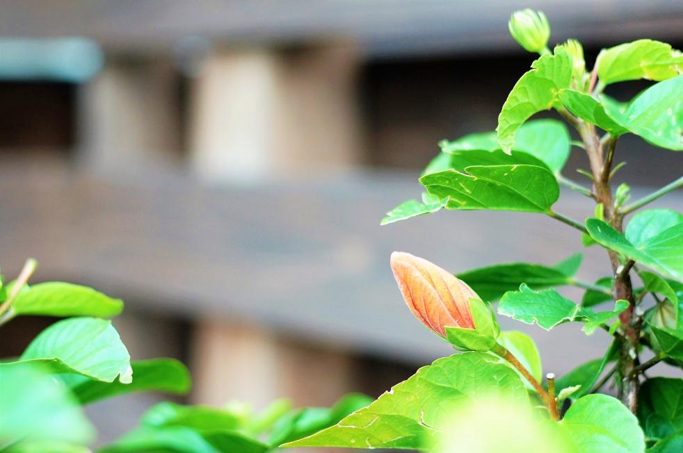 リゾラテラス天草の花2
