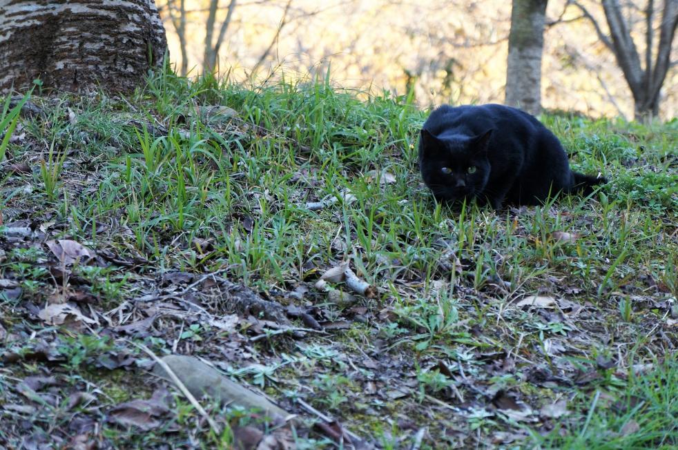 立岡自然公園 黒猫