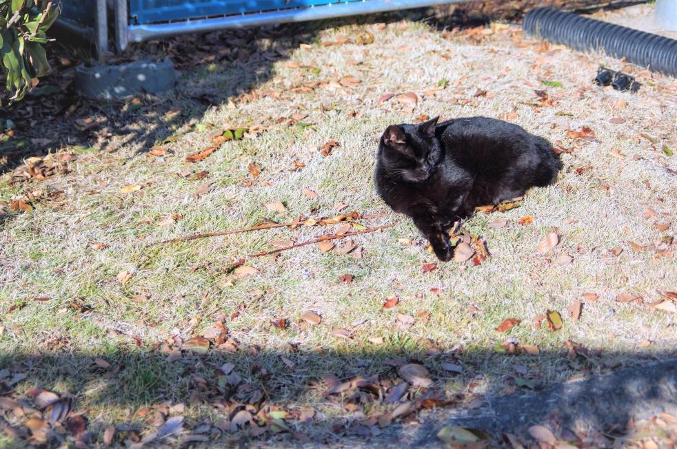 熊本城二の丸広場 黒猫