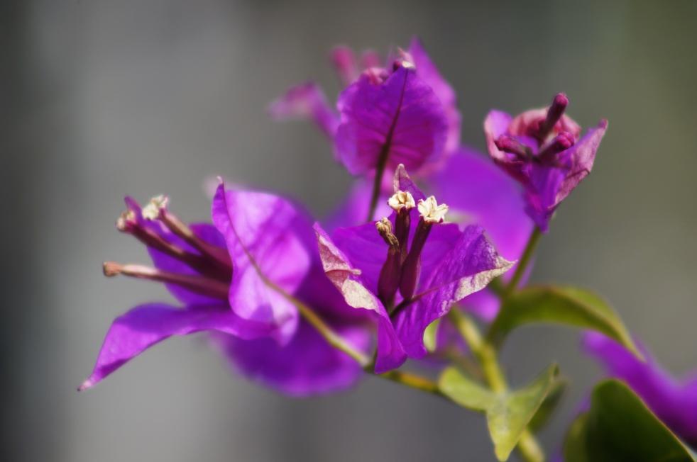 スパ・タラソ天草 紫の花