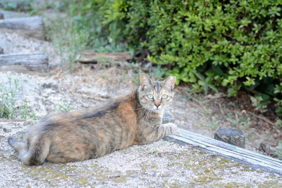 一本松公園の猫さん