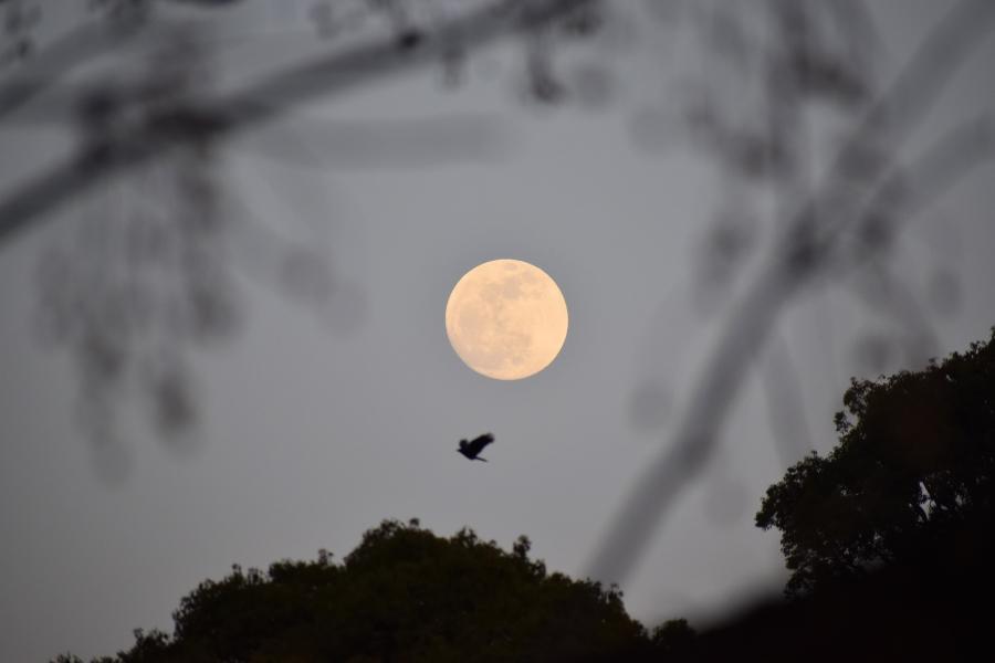 お月さまシリーズ♪