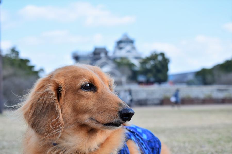 熊本城 そらくん初散歩