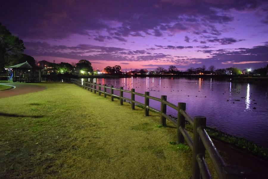 水前寺江津湖公園 夜の上江津湖