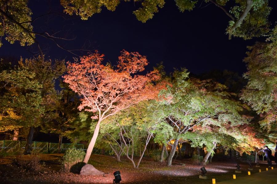 旧細川刑部邸の紅葉ライトアップ