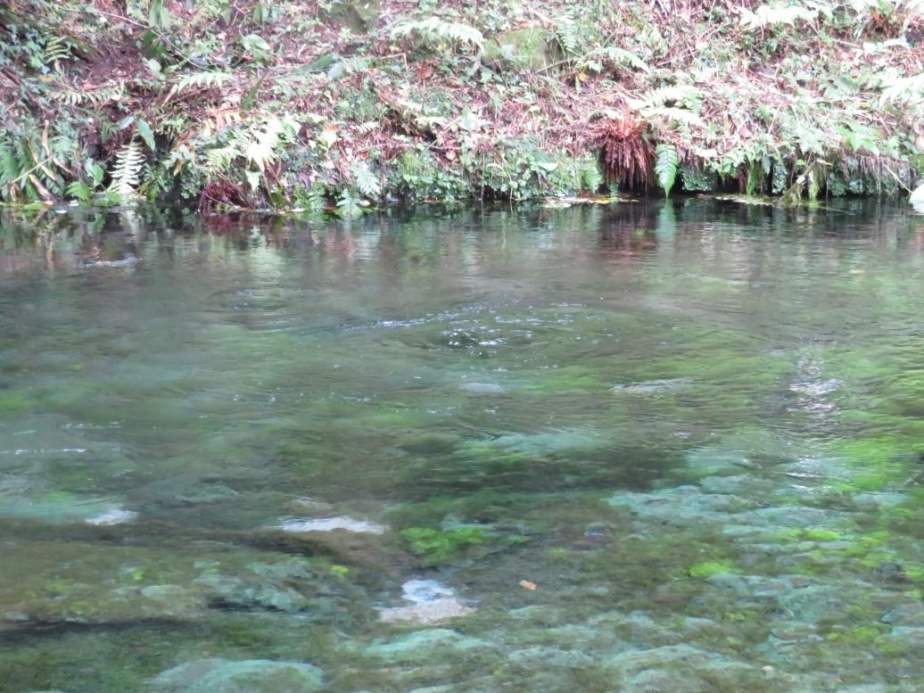 池山水源 湧水