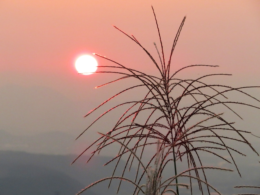 夕日とススキ