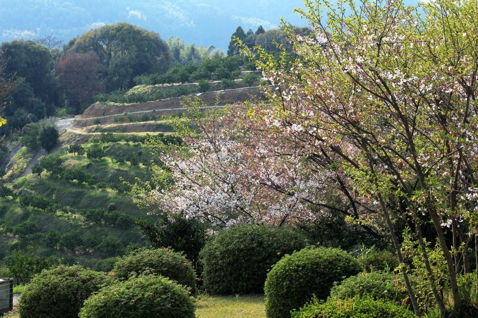 田原坂公園 葉桜