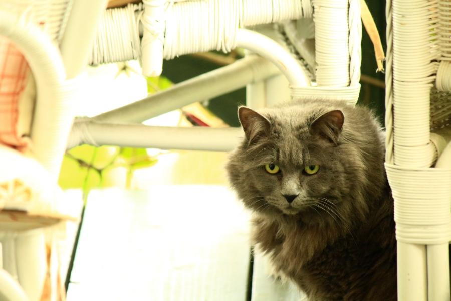 緑の小箱 看板猫
