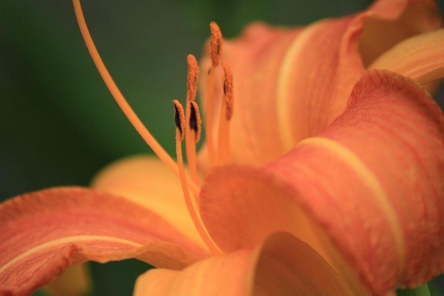 熊本テクノリサーチパーク 百合の花