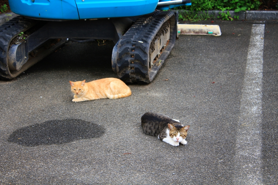 水前寺江津湖公園 猫