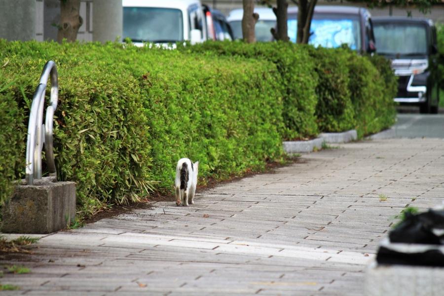 熊本港 通りすがりの猫